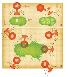 Viral Weapons - Deposit DNA inside Virus