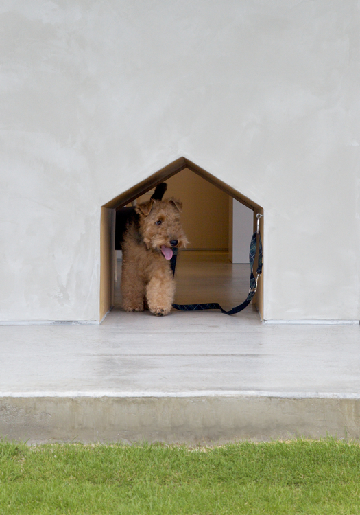 Chico the Minimalist-Dog-Shop 5