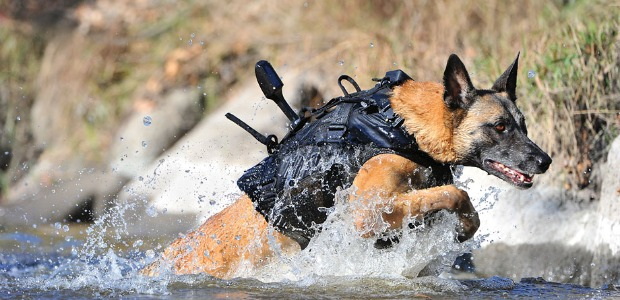 US Navy SEAL dogs equipped for combat
