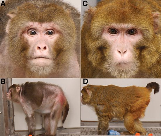 Two 27-year old monkeys side-by-side demonstrates the effect of slowing down aging