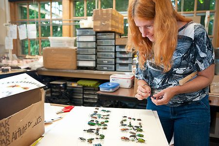 Jennifer Angus working on her next insect art idea