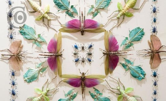 Jennifer Angus Insect Art 5