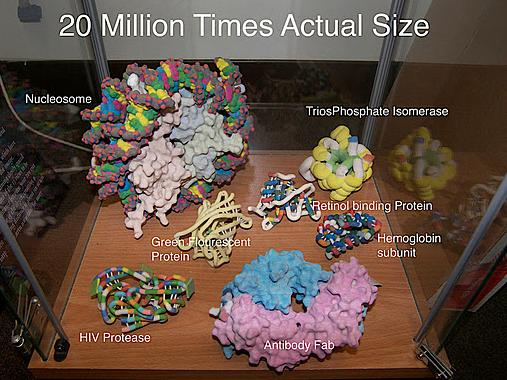 Various molecules magnified 20 million times actual size