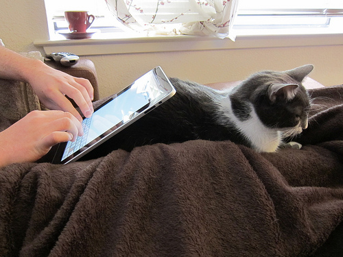 Loyal Apple evangelist uses his  pet cat as a stand for his ipad while in bed