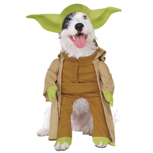 Terrier dressed like Yoda