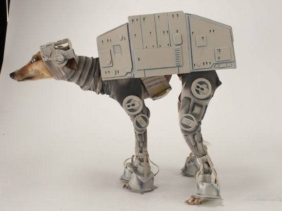 Whippet dressed like star wars robot