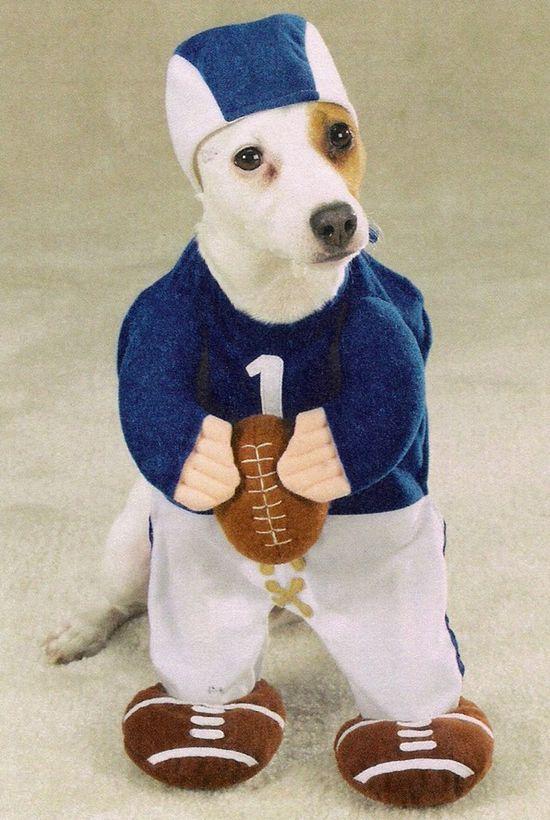Doggie dressed like a football player