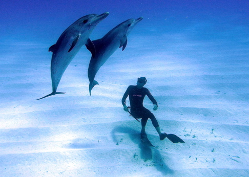 William Trubridge swims with a group of dolphins