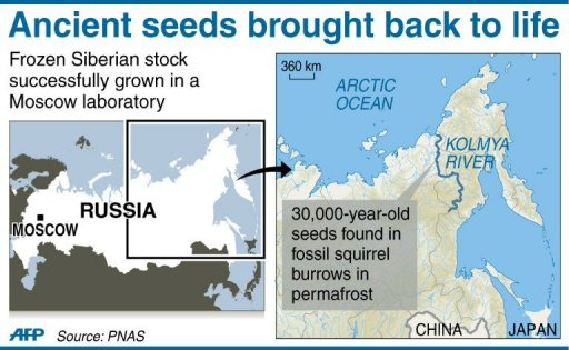 Location of the 30,000 year-old Silene stenophylla seeds dicovered in Russian Siberia near the Kolmya River