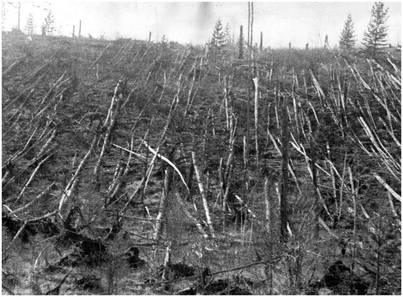 Trees were flattened from the blast and shockwave from the meteorite that exploded above Tunguska in northern Siberia in 1908