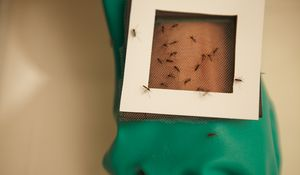 Without the chemicals in the Kite Patch, other mosquito repellants cannot stop mosquitos from transmitting illnesses like Malaria, Dengue Fever, and West Nile Virus