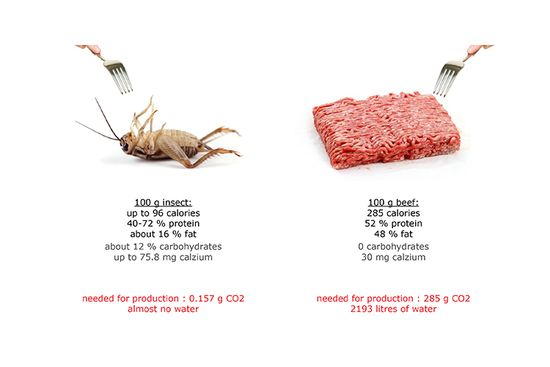 It's an incredible ecological savings compared to beef