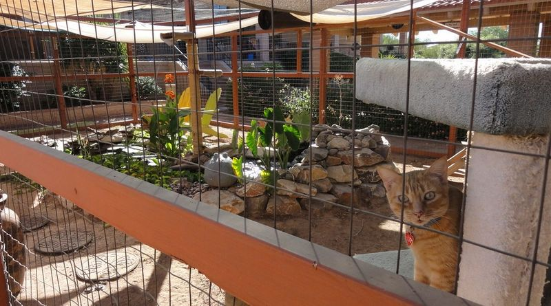 Beautiful tabby feline stares through the wire fencing in one of the 'Catio' cages