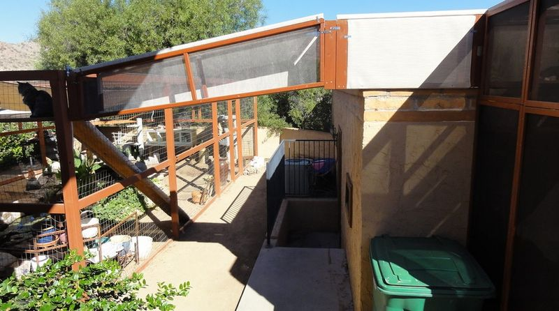 Tom installed a system of 'catwalks' to allow his kitties roam and throughout the 'Catio'