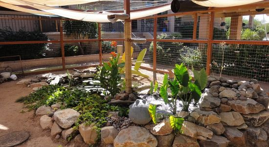 The centerpiece of the cat enclosure is a rock garden with the cat perching pole and koi pool inside it