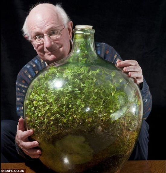 Still going strong - Pensioner David Latimer from Cranleigh, Surrey, with his bottle garden that was first planted 53 years ago and has not been watered since 1972 - yet continues to thrive in its sealed environment