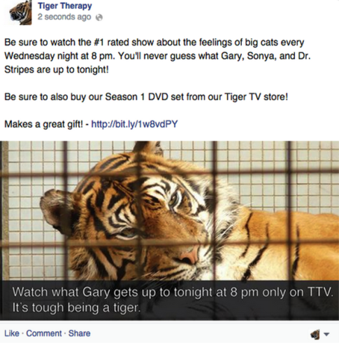 Tiger Therapy promotional ad